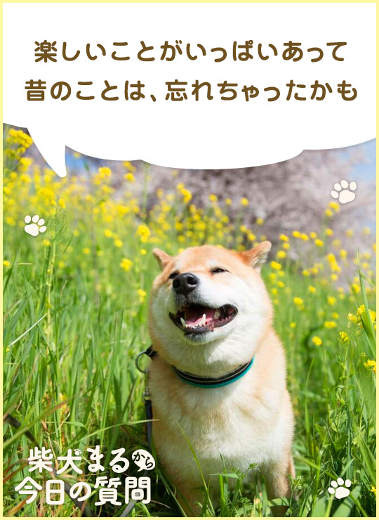あなたも柴犬まるの質問に答えよう